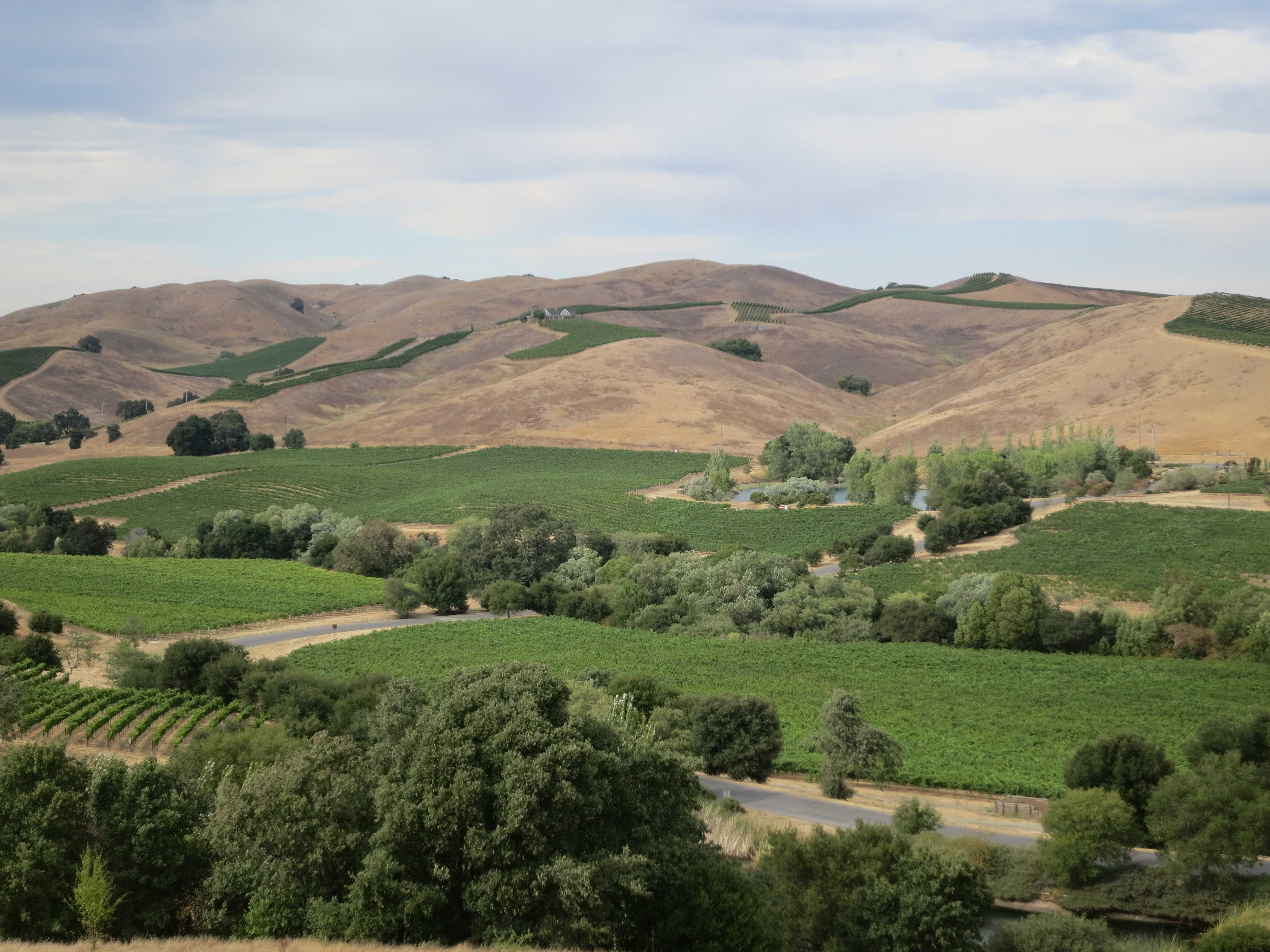 Why You Should Take a Limo Around Napa Valley
