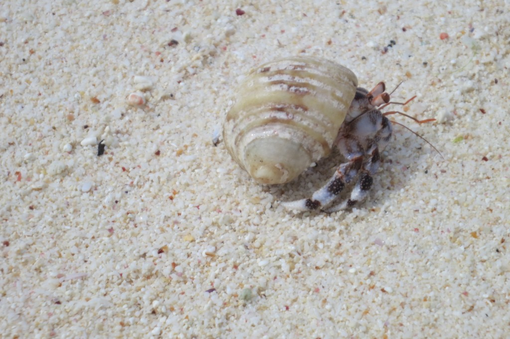 Kiritimati, Kiribati, Christmas Island, travel, Fiji, Air Pacific, beach, crab