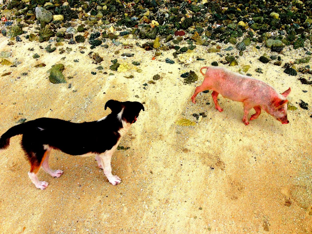 Majuro, Majuro Atoll, Marshall Islands, diving, Eneko, beach, pig, dog
