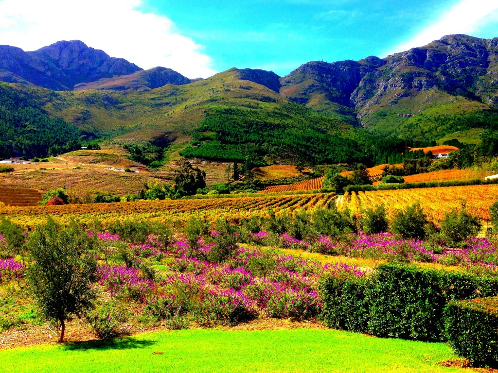 Franschhoek, vineyards, La Residence Hotel, view, mountains, South Africa, Western Cape, Cape Vineyards, small town, Africa