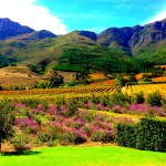 Why You Should Visit Franschhoek