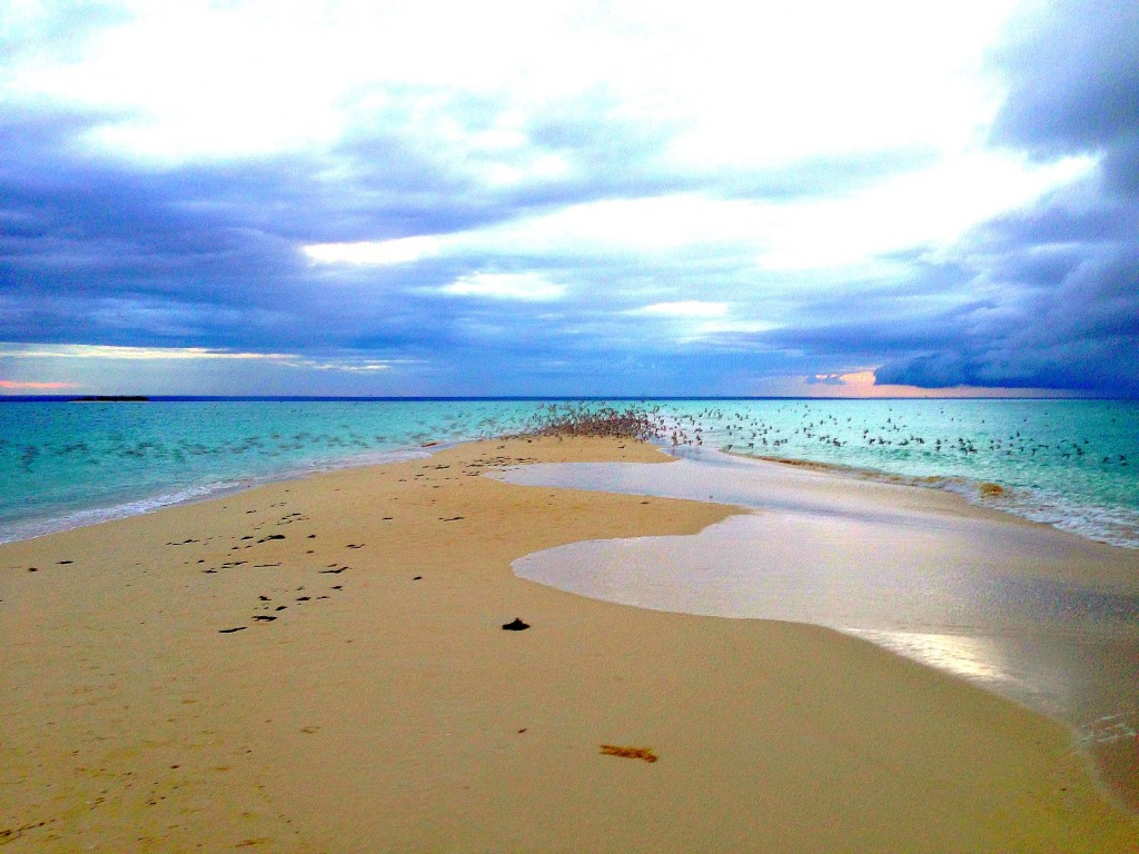 Medjumbe Private Island, Mozambique, Africa, Medjumbe, Indian Ocean, private island, island, luxury, hotel, birds