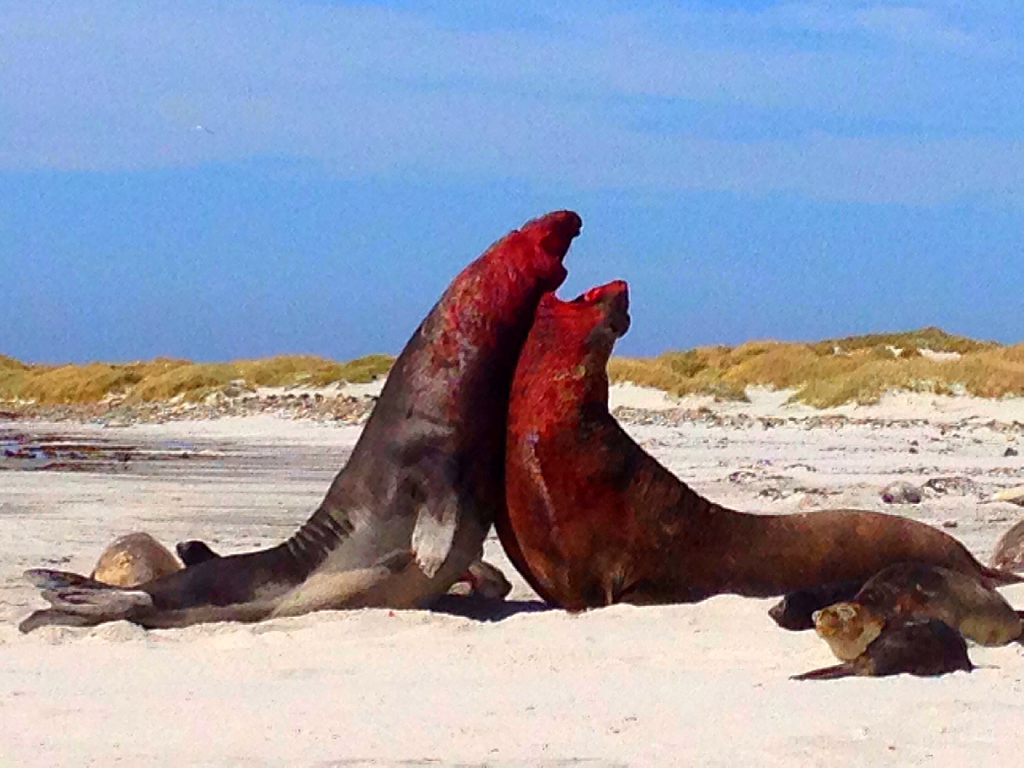Sea Lion Island, Falkland Islands