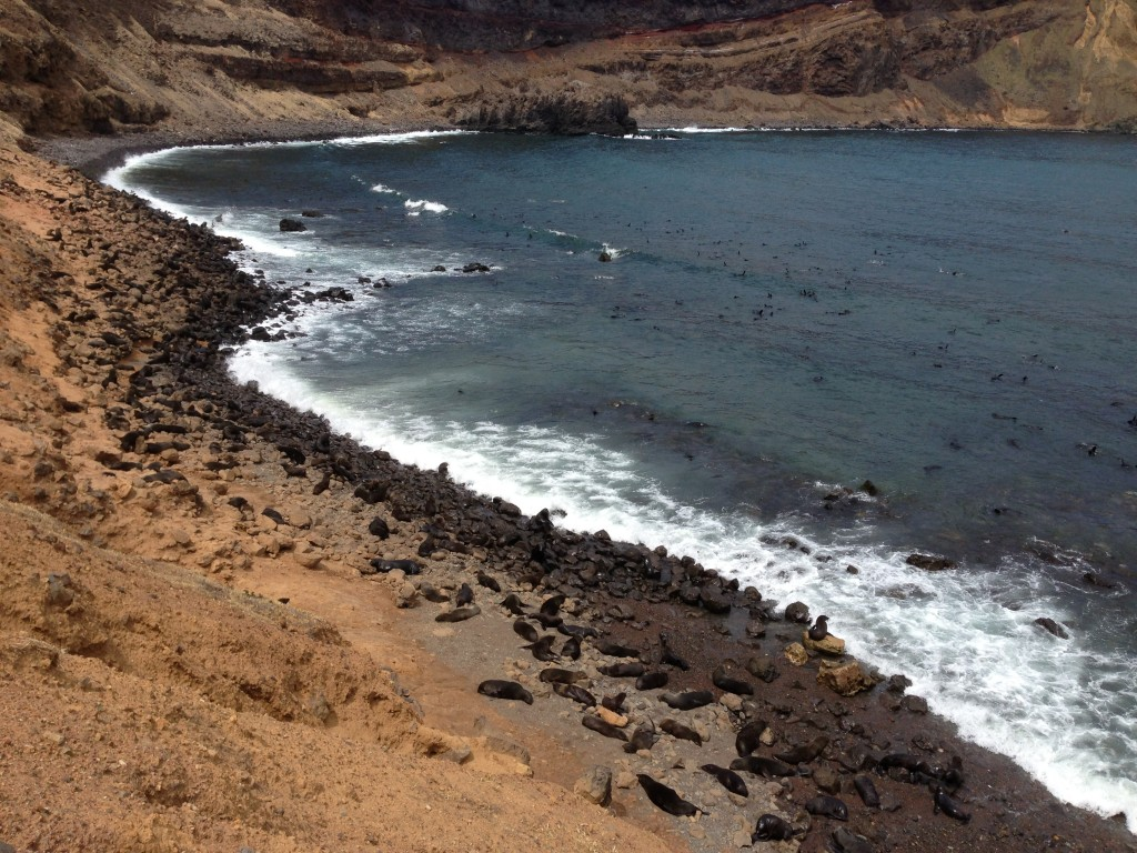 Robinson Crusoe Island, Chile, fur seals