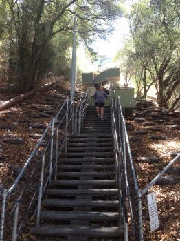 Kings Park, Jacobs Ladder, Perth, Western Australia, Australia