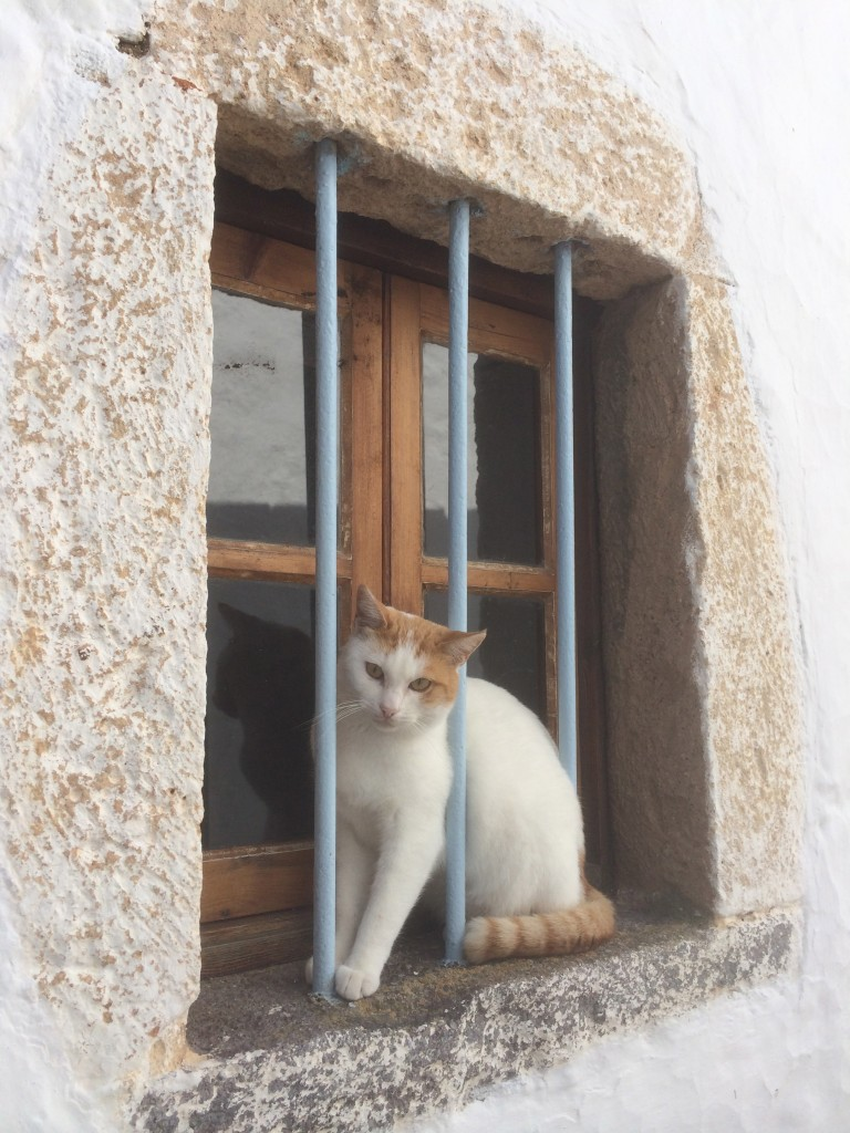 Chora, cat, Patmos, Greece