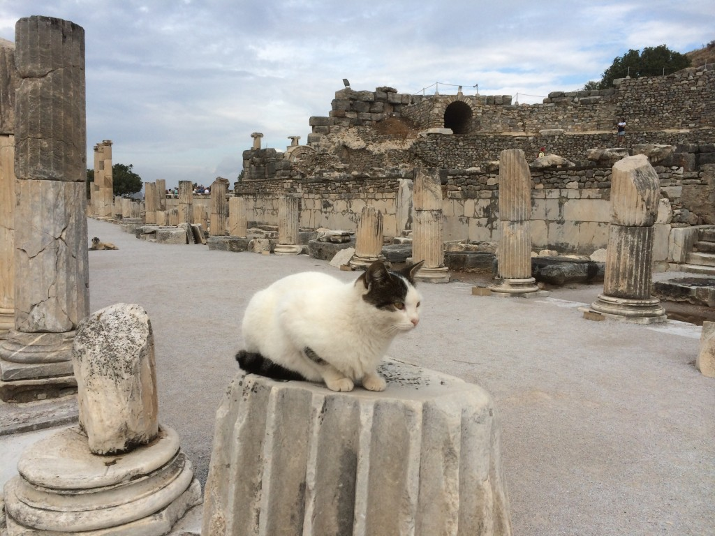 cats, ephesus, turkey