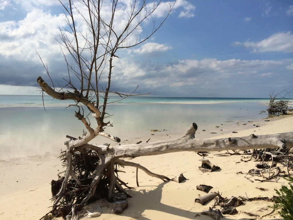 Gold Rock Beach, tree, beach, Grand Bahama Island