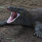 Komodo Island: Land of Dragons