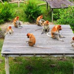 The Primates of Borneo