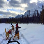 Dogsledding in Alberta, Canada