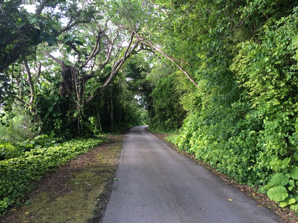 Rota, CNMI, Northern Mariana Islands, road