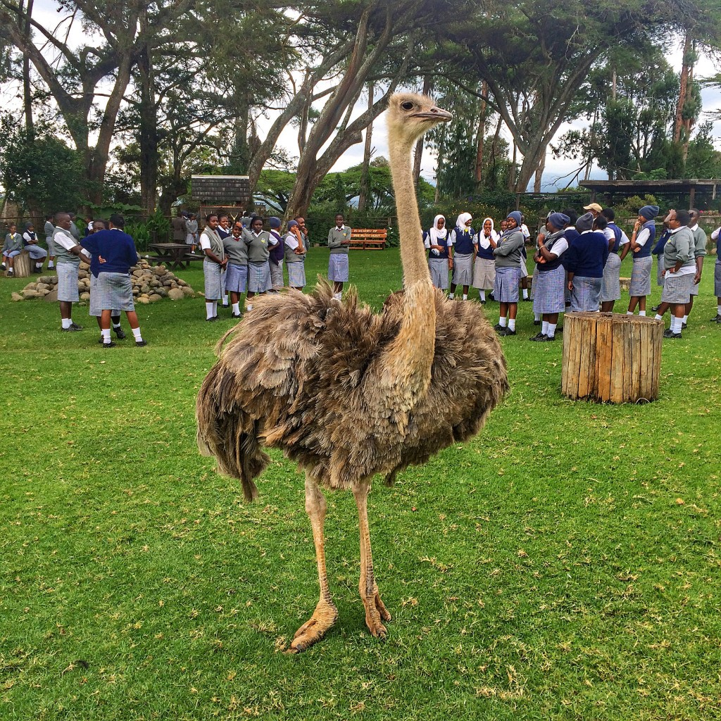 Fairmont Mount Kenya Safari Club, Kenya, orphanage, ostrich