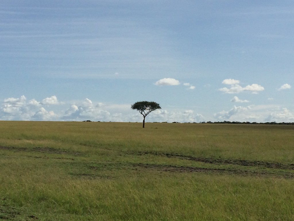 The 10 Most Memorable Trips of My Life, Most Memorable Trips, Africa, tree
