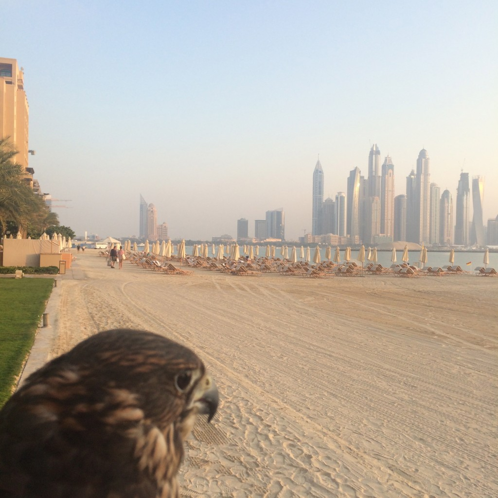 Staying on the Palm Islands of Dubai, Dubai, UAE, United Arab Emirates, Fairmont Hotels, falconry, Fairmont The Palm