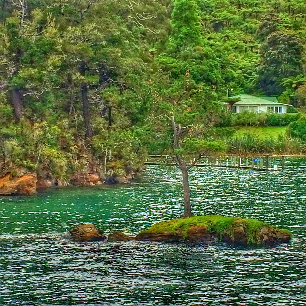 Picton, New Zealand, Queen Charlotte Sound, cruise, little tree