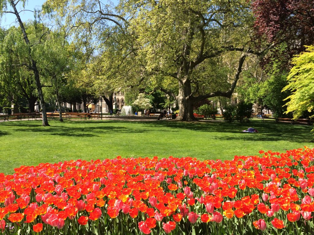 5 Awesome Things to do in Vienna, Austria, Vienna, Wien, flowers, park