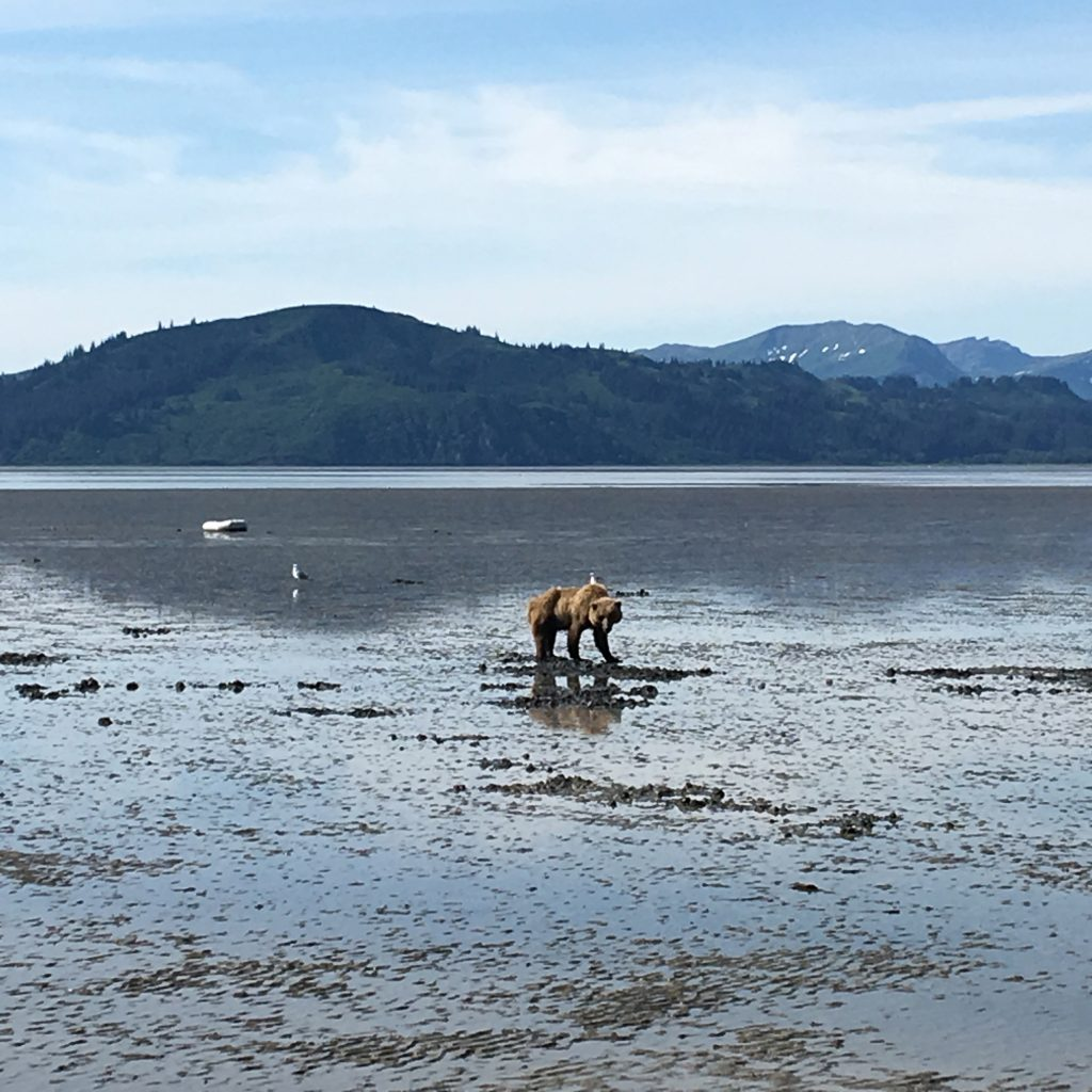 Day Trip to Lake Clark National Park, Lake Clark National Park, NPS, Alaska, brown bear, beach