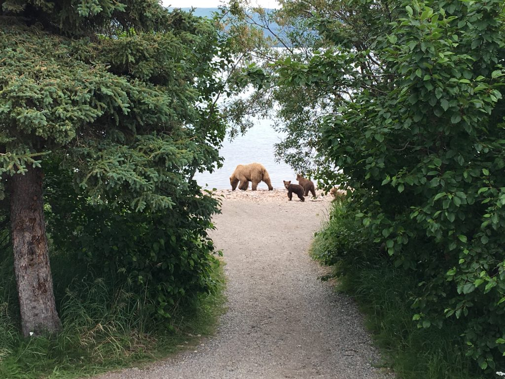 2.5 days in Katmai National Park, Katmai Naional Park, Alaska, National Park, bears
