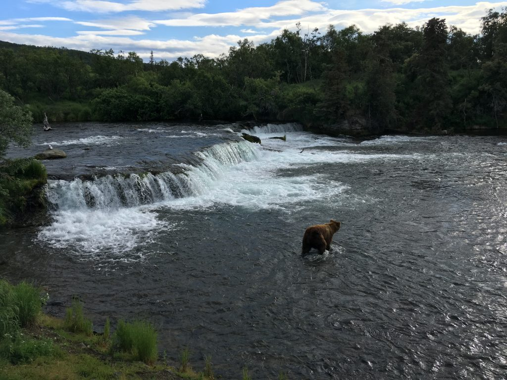 2.5 days in Katmai National Park, Katmai Naional Park, Alaska, National Park, bear, Brooks Falls