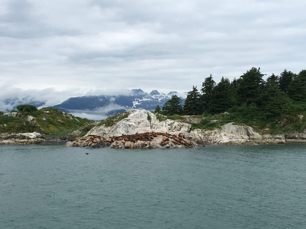 Day Cruise in Glacier Bay National Park, Glacier Bay National Park, Alaska, Gustavus, Margerie Glacier, sea lions