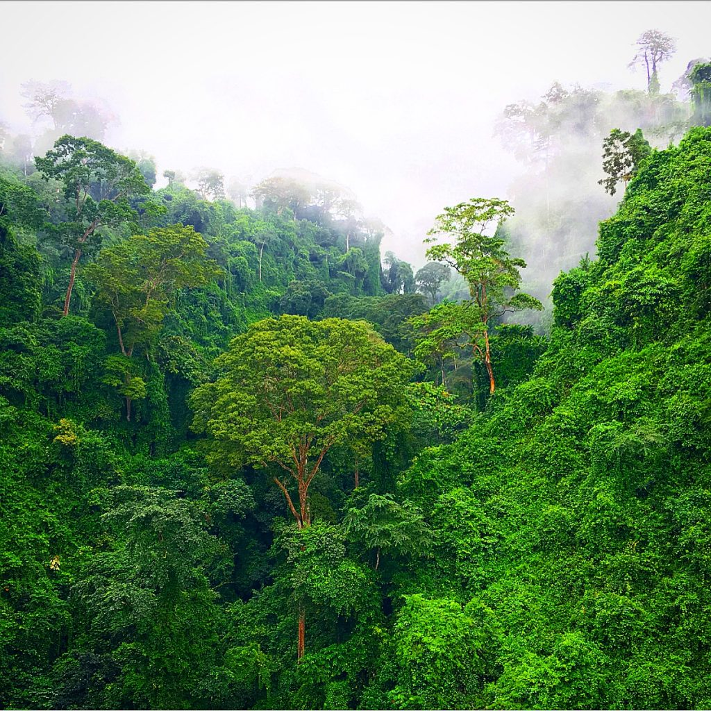 Equatorial Guinea is the Weirdest Country in the World, Equatorial Guinea, Malabo, Bioko, jungles