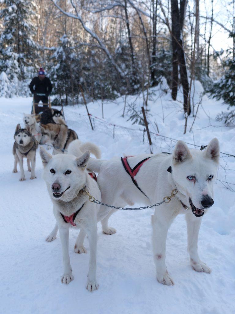 A Perfect Winter Weekend in Mont-Tremblant, Quebec, Mont-Tremblant, Mont Tremblant, Tremblant, dogsledding
