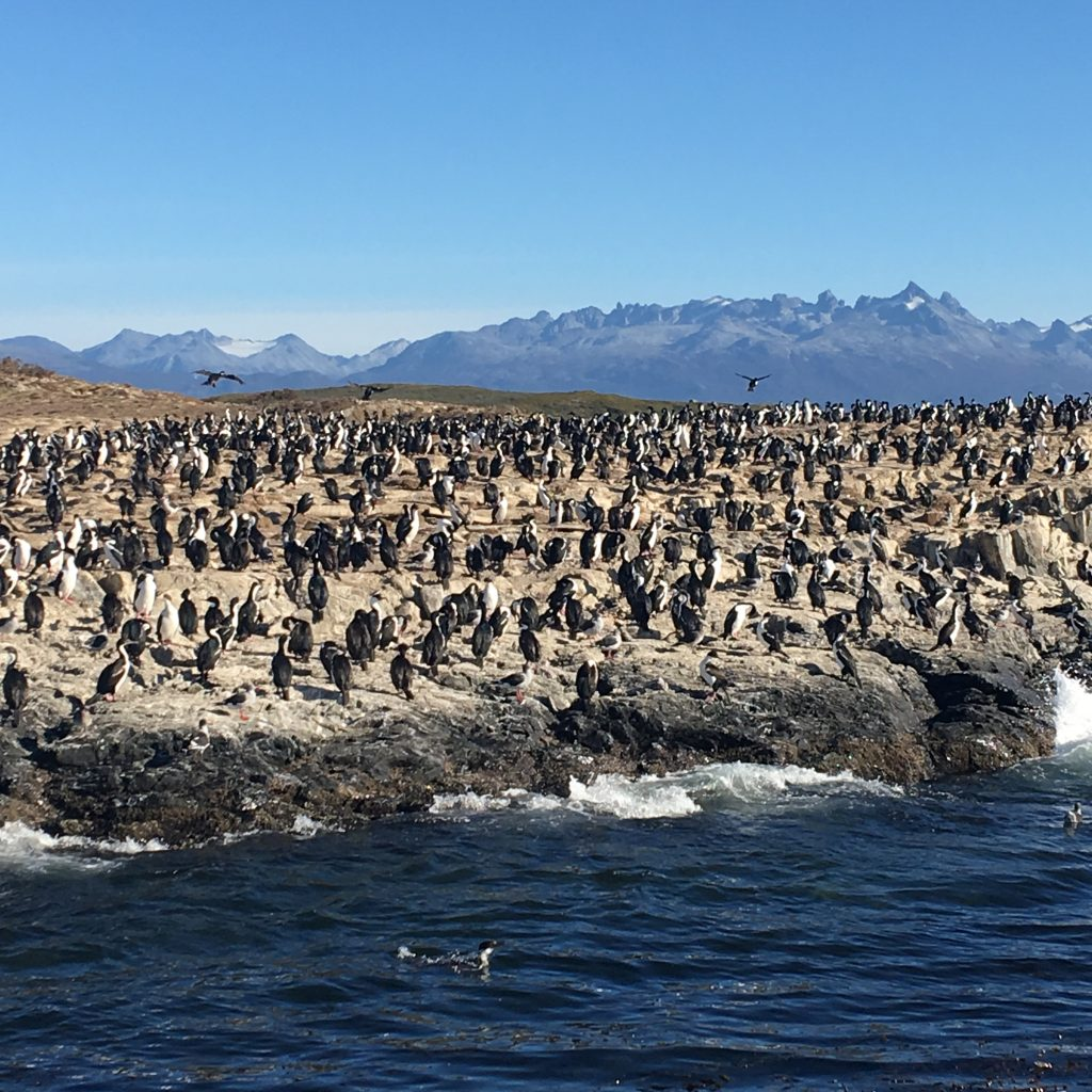 Two Days in Ushuaia, Argentina, Ushuaia, Beagle Channel Tour, birds