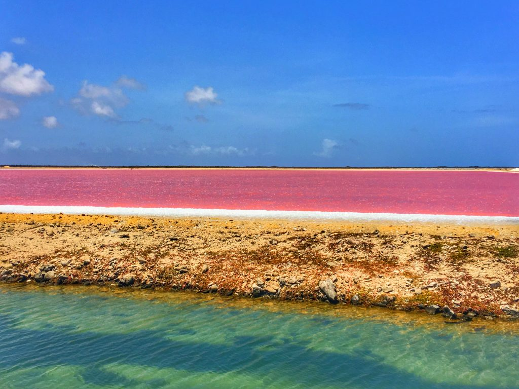 2 Days in Bonaire, Bonaire, Caribbean, salt flats, pink water