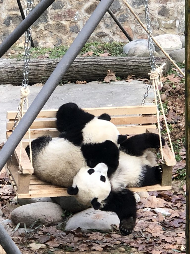 Pandas are my new favorite animal without question!