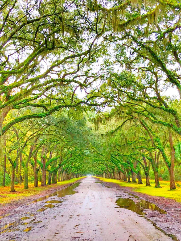 The Avenue at Wormsloe Historic Site on the outskirts of Savannah is really cool