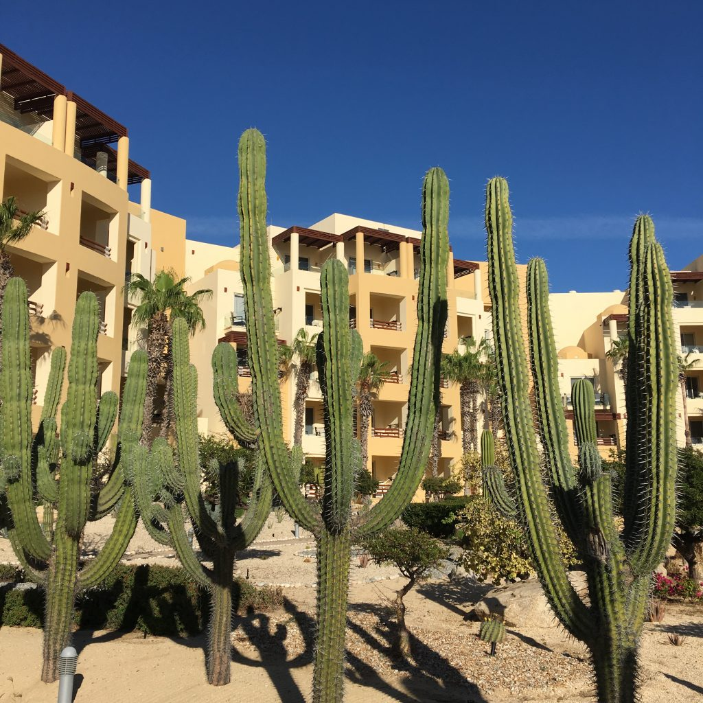 Cacti at the Pacifica Resort make everything better