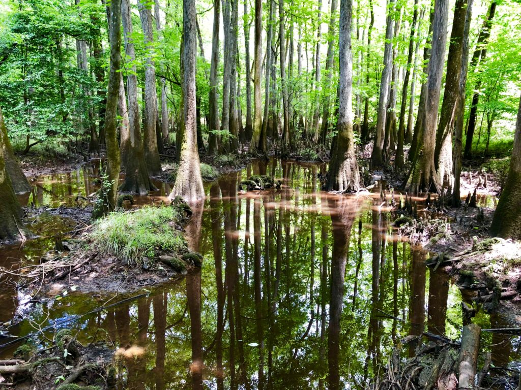 Reflections in the swamps of Congaree National Park