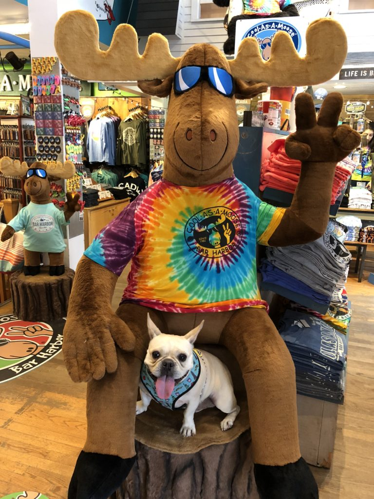 Hector enjoying the shops in Bar Harbor, Maine