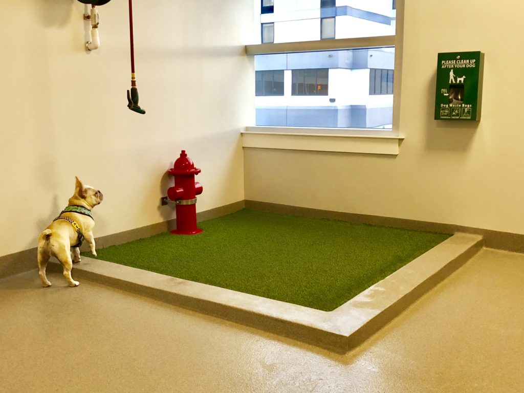 The pet relief area at Bangor Airport in Maine