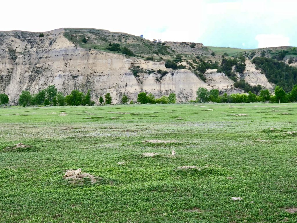 Prairie Dog Fields in Theodore Roosevelt National Park