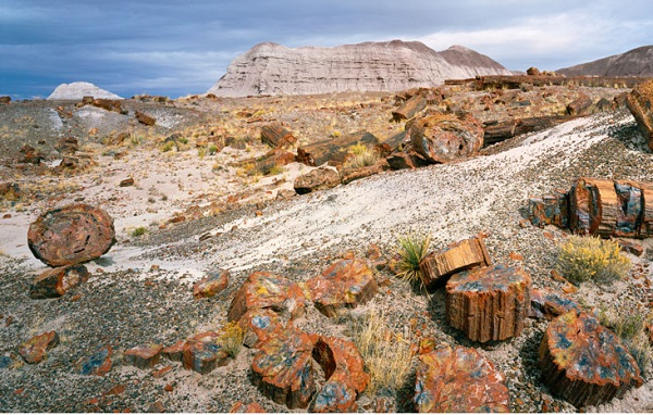 A different kind of forest in Petrified Forest National Park