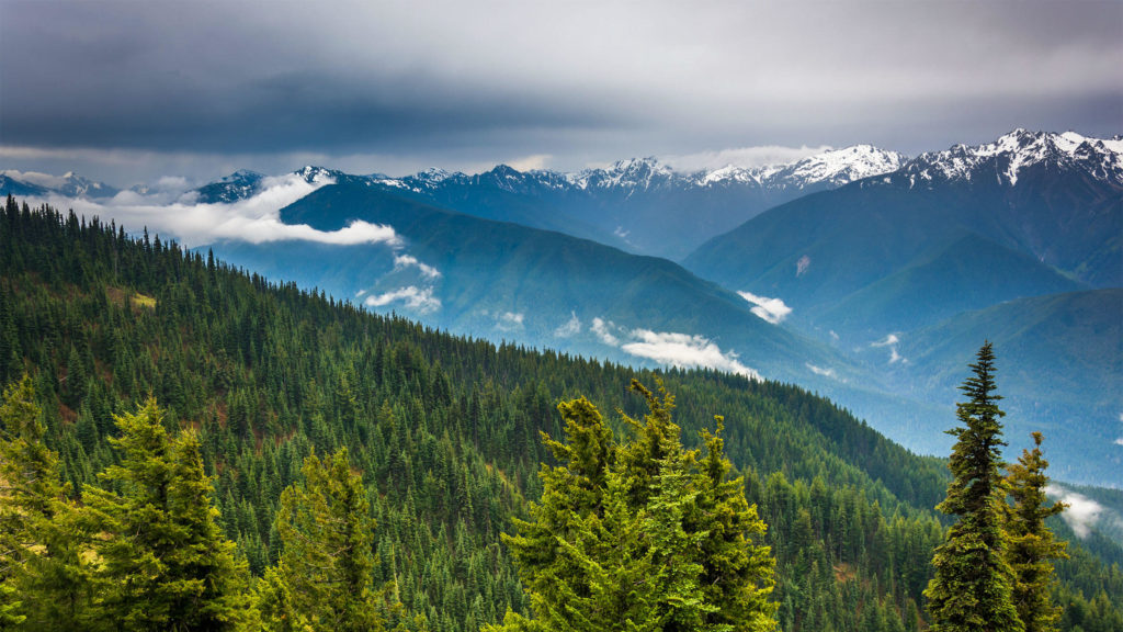 The beauty of Olympic National Park