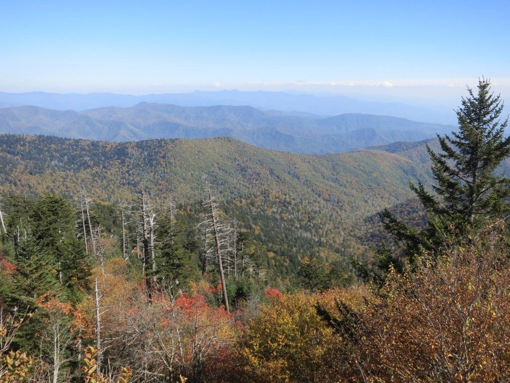 Typical view in Smoky Mountains National Park