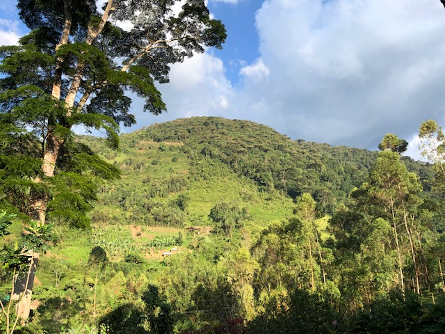 Hotel view of the mountain in Bwindi National Park