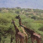 4 Days in the Serengeti at the Four Seasons Safari Lodge